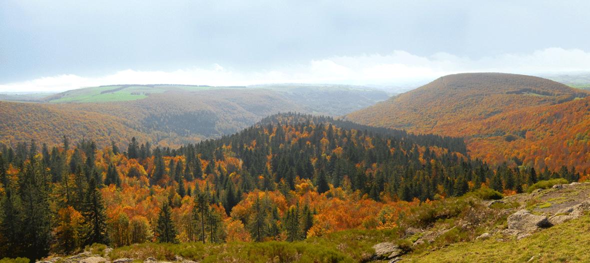 De la Forêt d'Aubrac